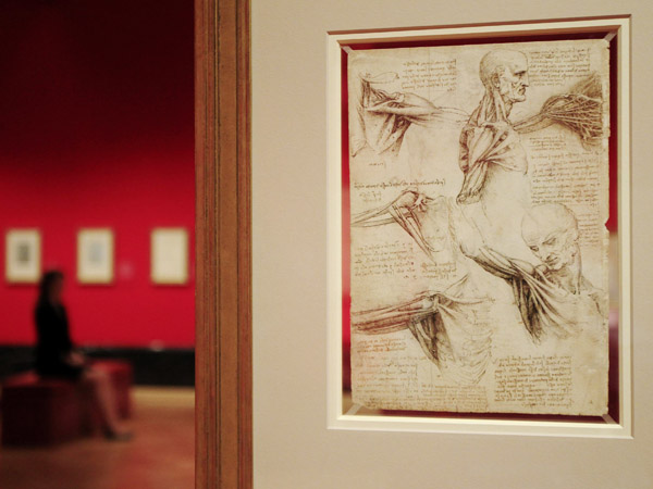 "Leonardo da Vinci's drawing ""the muscles of the shoulder, c1510-11"" are pictured at the Queen's Gallery at Buckingham Palace in London"